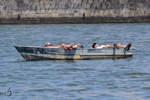 Enspannung pur auf dem Rio Douro (Porto, Mai 2013)